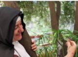 """Nel ricordo di suor Chiara Ausilia: """"poesie di spiritualità orante per l'adorato Gesù"""""""